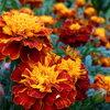 Kleur jouw bord met eetbare bloemen