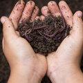 Mulch de bodem voor de winter