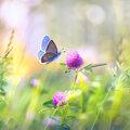 Neem deel aan de Grote Vlindertelling 2021