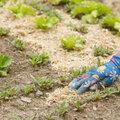 nieuw assortiment bodembedekkers