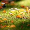 Ook in de herfst en winter genieten van uw gazon