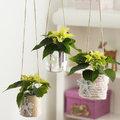 Mini-planten: stralende sterren in november