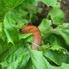 Tips om slakken uit de tuin te weren