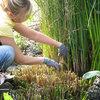 Vijveren in september: goed voederen en planten verzorgen