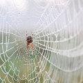 Waarom er meer spinnen zijn in de herfst
