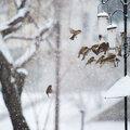Wat te doen bij sneeuw en vorst?