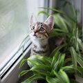 Welke kamerplanten zijn diervriendelijk?