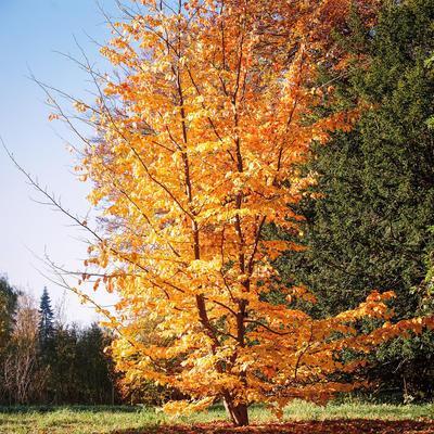 Bomen Voor In De Tuin.Meest Geschikte Bomen Voor Kleine Tot Middelgrote Tuinen