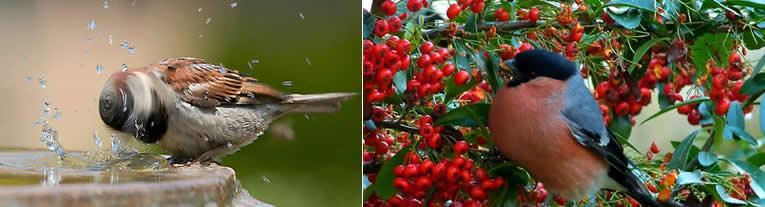 vogelvriendelijke tuin aanleggen