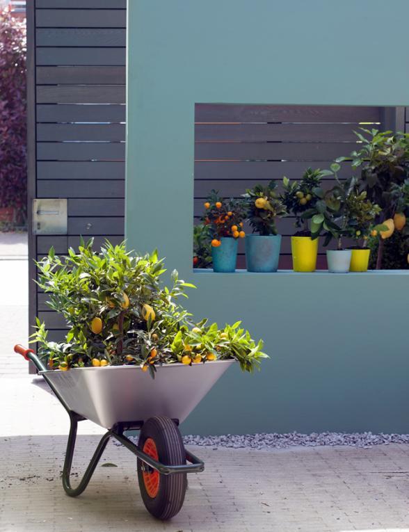 Soorten citrusboompjes