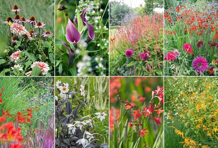 Zomerbollen en vaste planten: de perfecte match