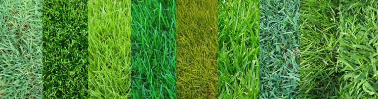 soorten gras om in te zaaien
