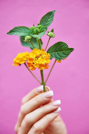 Bloemen voor vlinders Lantana