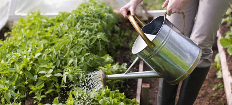10 natuurlijke meststofrecepten om zelf te maken