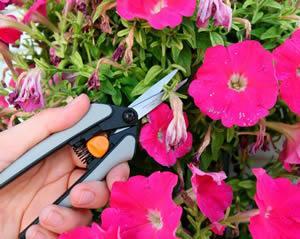 tips voor zomerbloemen