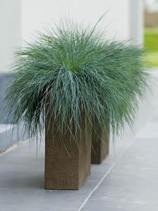 Grassen In Pot.Zet Een Gras Op Je Terras Siergrassen In Pot