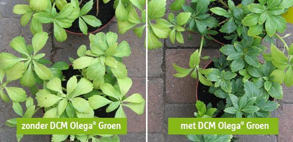 DCM bladvoeding voor & na