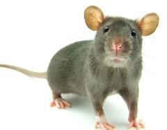de oplossing tegen muizen