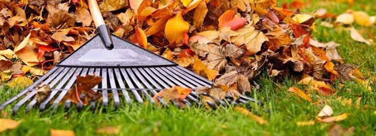 afgevallen bladeren harken voor een gezond gazon