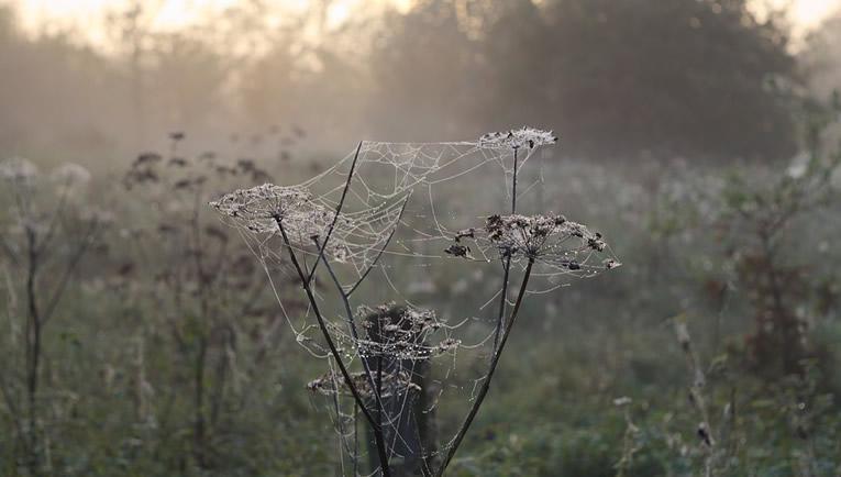 Mystiek in een tuin