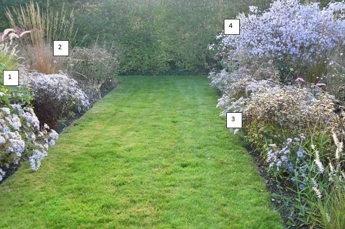 jan spruyt cultivars - vaste planten border