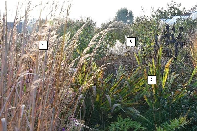 borderideeën online - plantencombinaties