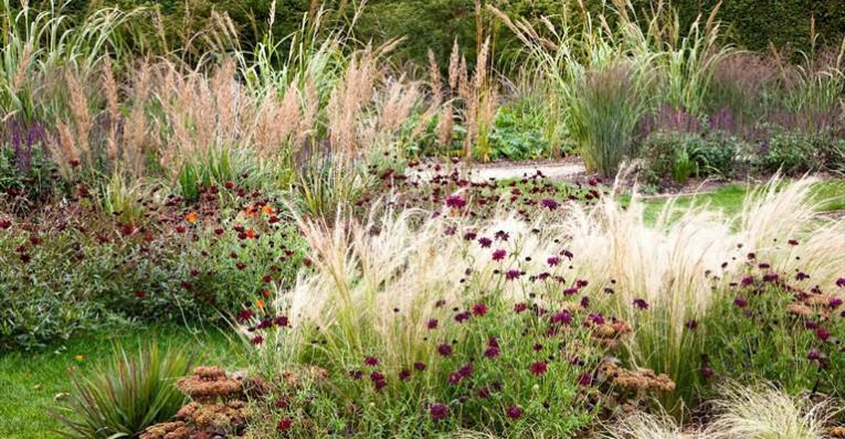 wat is een prairietuin, nieuwe tuinideeën, tuinplannen maken