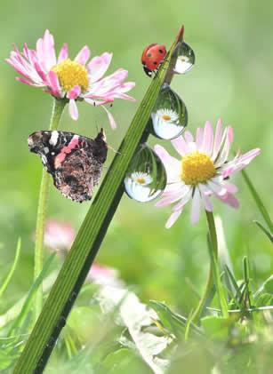 Insecten in de tuin : gewenst of ongewenst?