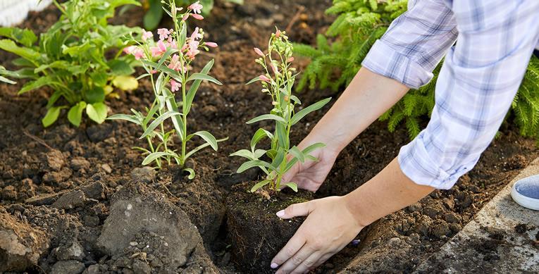 Mooie planten door goede bodemstructuur - bodemverbetering voor aanplanten