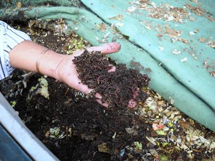 wormen kwkeken met een wormenbak