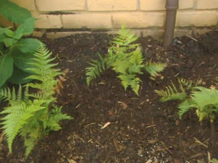 Bodemonderhoud voor de winter. turf of champignonmest om planten te beschermen