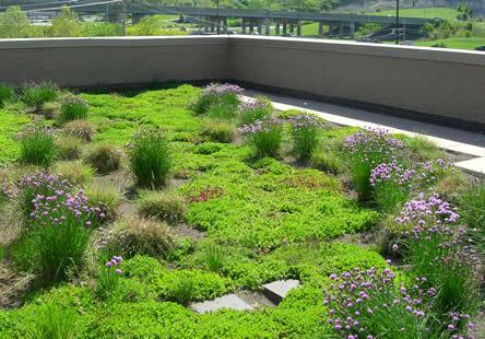 Groendaken aanplanten - keuze van planten op een groendak