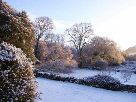 winter in de tuin