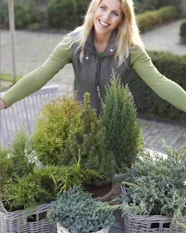 soorten coniferen en variaties in coniferen