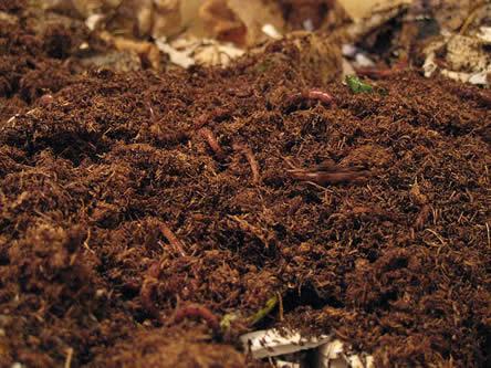 composteren met wormen: wormenbak compost maken