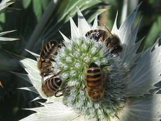 bijen lokken in de tuin