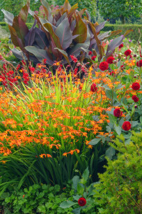 Border met vaste planten in combinatie Crocosmia en Dahlia.