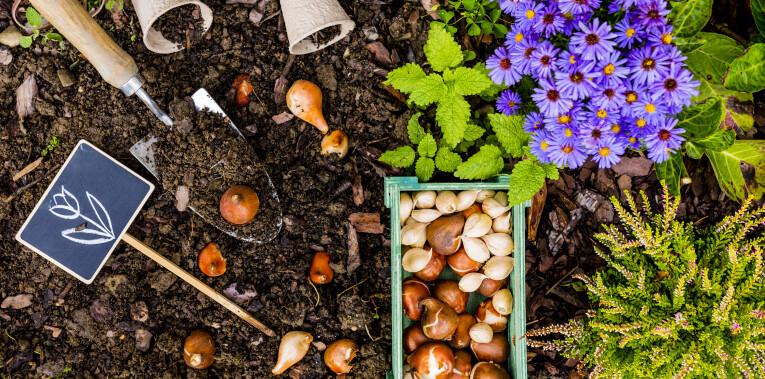 Voorbereidingen bij de aanplant van bloembollen