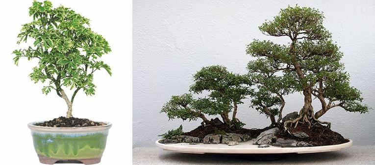 Bonsai Groen In Elke Ruimte