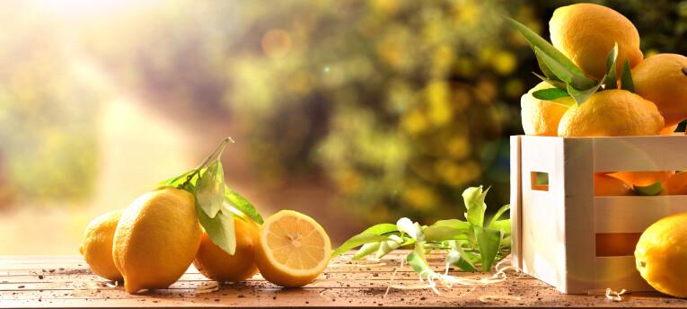 citrusvruchten kweken