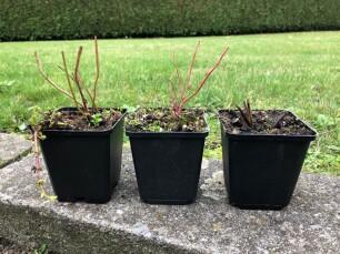vaste planten winterbeeld
