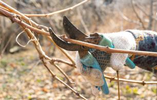 Snoei dood hout met een scherpe snoeischaar