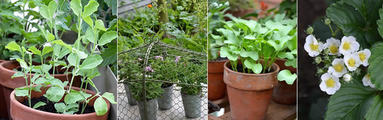 vroege groenten in de vierkante meter moestuin