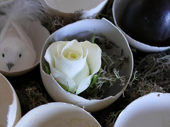 roos in het ei plaatsen met een beetje mos