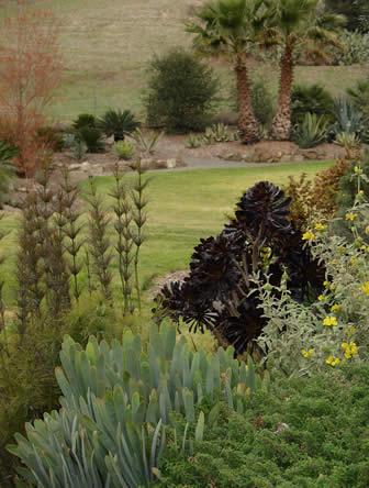 Exotische tuin met zwartkop of Aenoium