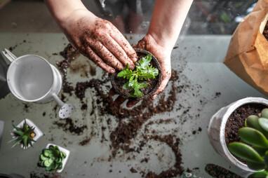 Verplanten van kamerplanten