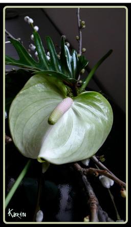 <H1>Bloemschikken lente met online bloemschikcursus