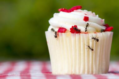 Zoete lekkernijen zijn aantrekkelijk voor mieren