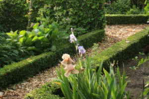 mulch in de tuin
