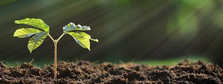 plantenvoeding stimuleren - gezonde plantengroei